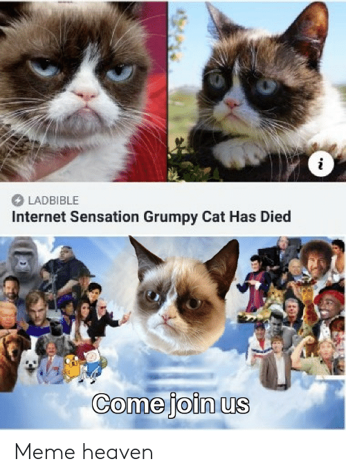Heaven, Internet, and Meme: LADBIBLE  Internet Sensation Grumpy Cat Has Died  Come joinus Meme heaven
