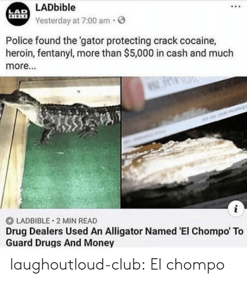 Club, Drugs, and Heroin: LADbible  Yesterday at 7:00 am.  LAD  Police found the 'gator protecting crack cocaine,  heroin, fentanyl, more than $5,000 in cash and much  more...  LADBIBLE 2 MIN READ  Drug Dealers Used An Alligator Named 'EI Chompo To  Guard Drugs And Money laughoutloud-club:  El chompo