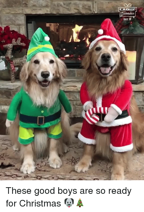Christmas, Dank, and Good: LADVENT  DAY 17 These good boys are so ready for Christmas 🐶🎄