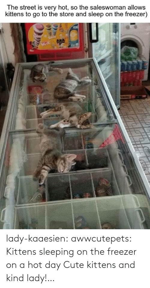 Sleeping: lady-kaaesien: awwcutepets: Kittens sleeping on the freezer on a hot day Cute kittens and kind lady!…