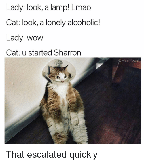 Funny, Lmao, and Wow: Lady: look, a lamp! Lmao  Cat: look, a lonely alcoholic!  Lady: wow  Cat: u started Sharron  @MasiPopal That escalated quickly