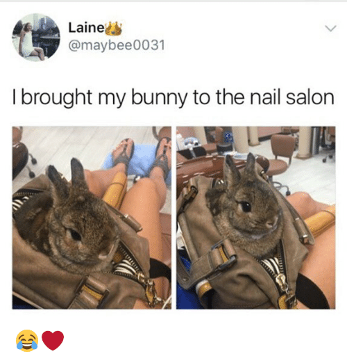 Memes, Nail Salon, and Salon: Laine  @maybee0031  I brought my bunny to the nail salon 😂❤️
