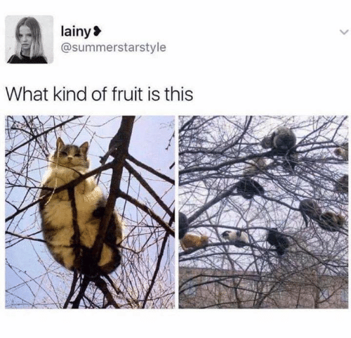 Memes, 🤖, and Fruit: lainy  @summerstarstyle  What kind of fruit is this