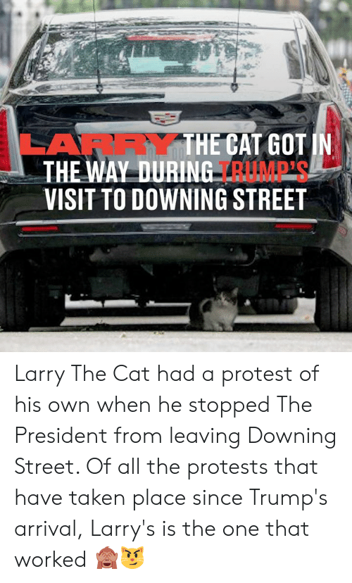 Arrival: LARRYTHE CAT GOT IN  THE WAY DURING RUMP'S  VISIT TO DOWNING STREET Larry The Cat had a protest of his own when he stopped The President from leaving Downing Street. Of all the protests that have taken place since Trump's arrival, Larry's is the one that worked 🙈😼