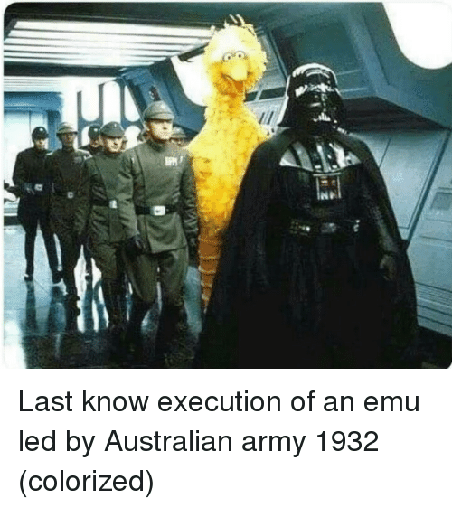 emu: Last know execution of an emu led by Australian army 1932 (colorized)
