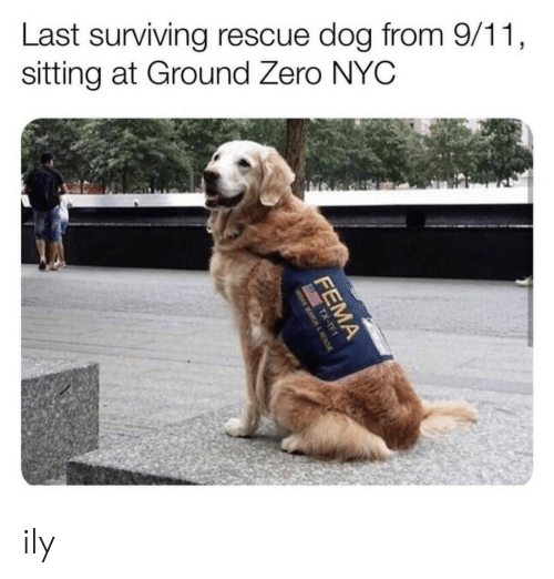 9/11, Zero, and Dog: Last surviving rescue dog from 9/11,  sitting at Ground Zero NYC  FEMA  TX-TF1  1-X  SEAR&RESC ily