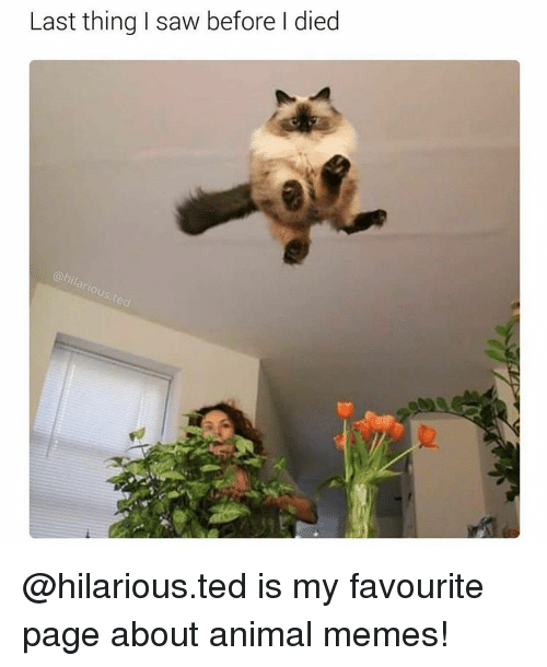 Memes, 🤖, and Anime Memes: Last thing I saw before died @hilarious.ted is my favourite page about animal memes!