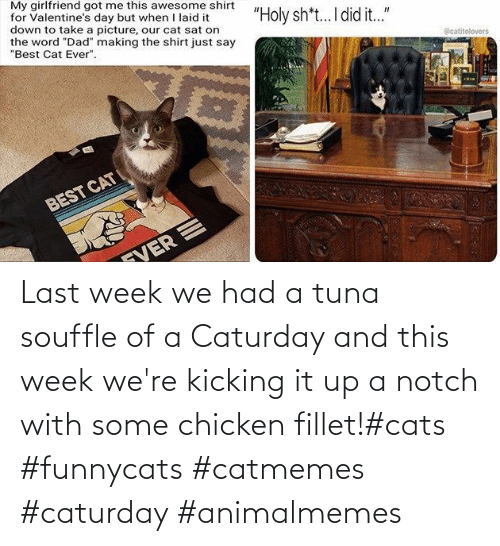 Chicken: Last week we had a tuna souffle of a Caturday and this week we're kicking it up a notch with some chicken fillet!#cats #funnycats #catmemes #caturday #animalmemes