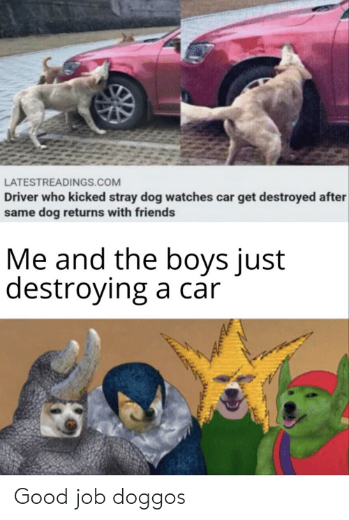 Friends, Good, and Watches: LATESTREADINGS.COM  Driver who kicked stray dog watches car get destroyed after  same dog returns with friends  Me and the boys just  destroying a car Good job doggos