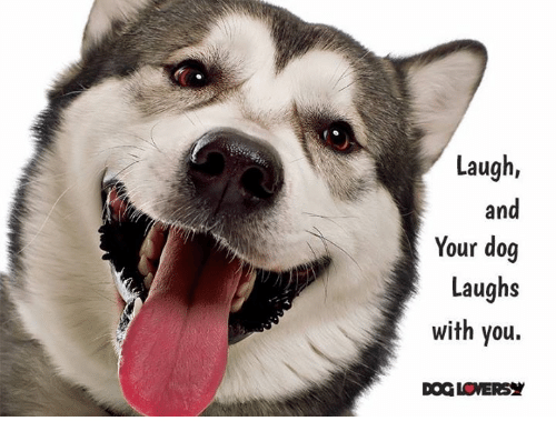 Dog Laughing: Laugh  and  Your dog  Laughs  with you.  DOGLOVERSY
