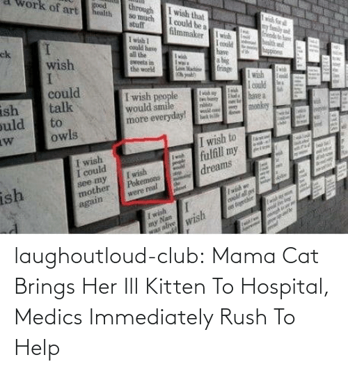 Hospital: laughoutloud-club:  Mama Cat Brings Her Ill Kitten To Hospital, Medics Immediately Rush To Help