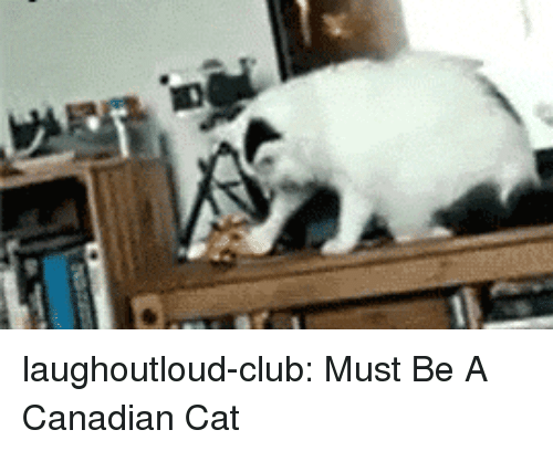 Club, Tumblr, and Blog: laughoutloud-club:  Must Be A Canadian Cat