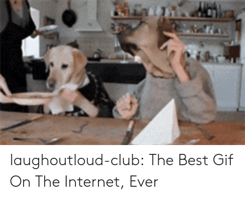 Club, Gif, and Internet: laughoutloud-club:  The Best Gif On The Internet, Ever