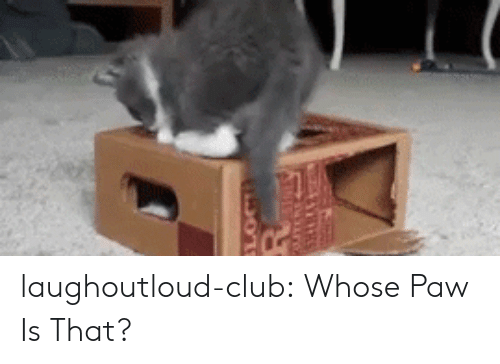 Club, Tumblr, and Blog: laughoutloud-club:  Whose Paw Is That?