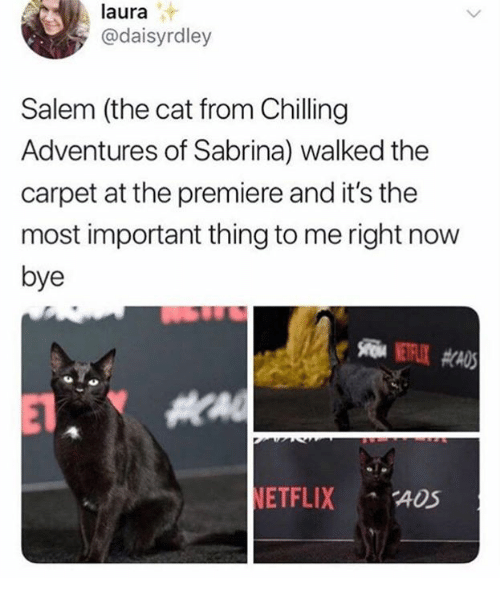 Salem, Cat, and Sabrina: laura  @daisyrdley  Salem (the cat from Chilling  Adventures of Sabrina) walked the  carpet at the premiere and it's the  most important thing to me right now  bye  ETFLIX ADS