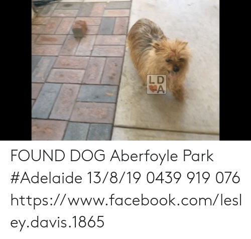 Facebook, Memes, and facebook.com: LD  A FOUND DOG Aberfoyle Park #Adelaide 13/8/19 0439 919 076 https://www.facebook.com/lesley.davis.1865