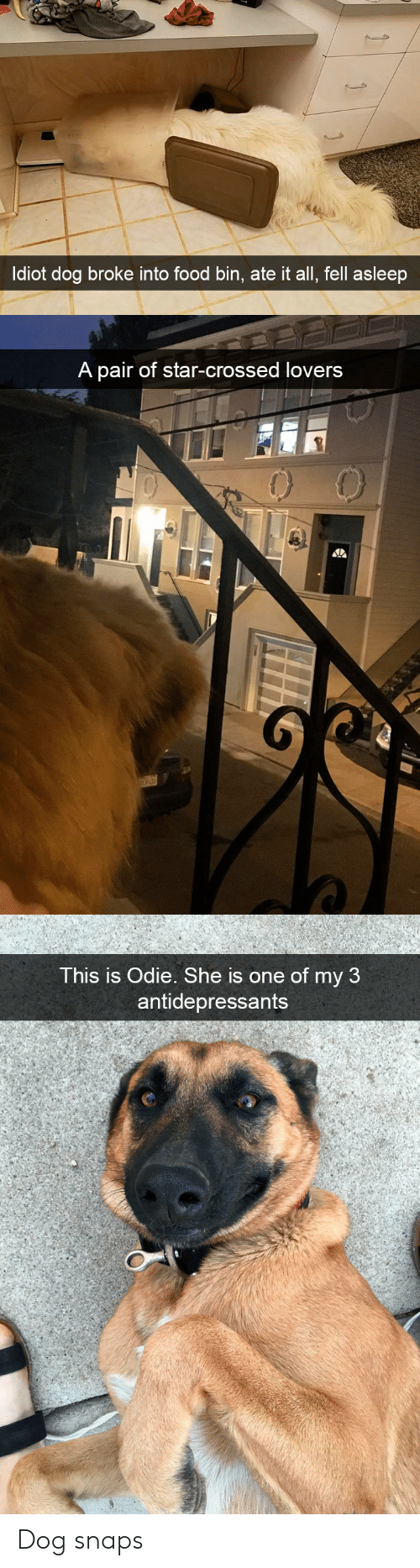 Food, Star, and Dog: ldiot dog broke into food bin, ate it all, fell asleep   A pair of star-crossed lovers   This is Odie. She is one of my 3  antidepressants Dog snaps