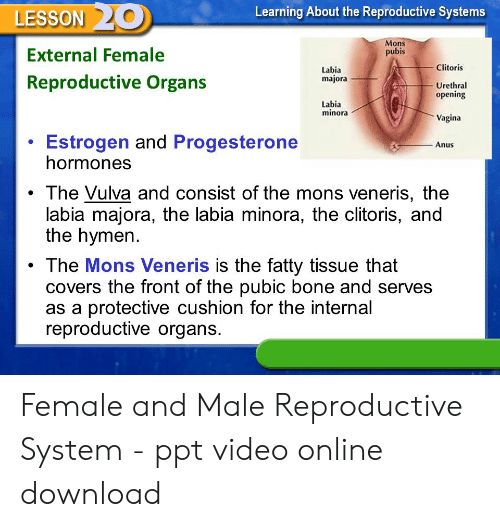 Vagina anatomy questions