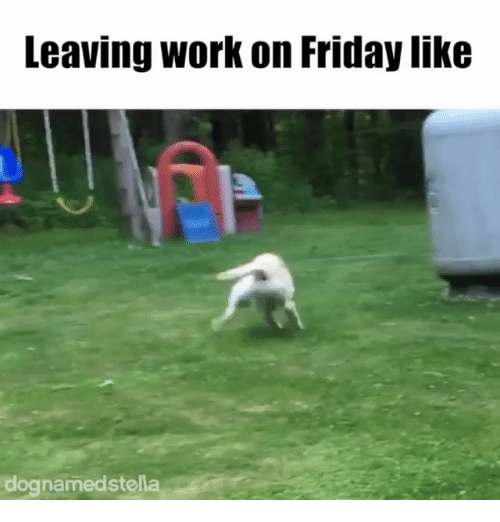 Dank, Friday, and Work: Leaving work on Friday like  dognamedstella