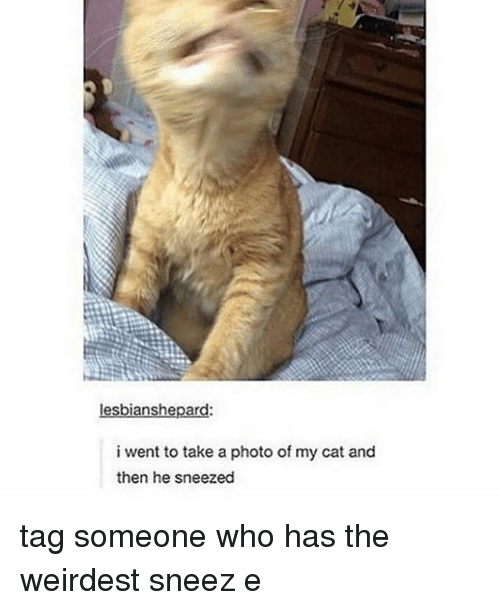 Aing: lesbianshepard:  i went to take a photo of my cat and  then he sneezed tag someone who has the weirdest sneez e