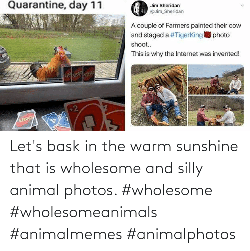 warm: Let's bask in the warm sunshine that is wholesome and silly animal photos. #wholesome #wholesomeanimals #animalmemes #animalphotos