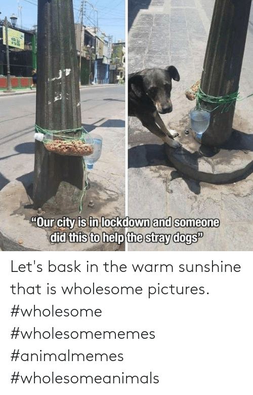 warm: Let's bask in the warm sunshine that is wholesome pictures. #wholesome #wholesomememes #animalmemes #wholesomeanimals