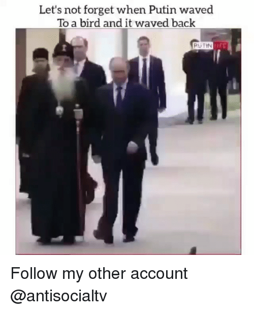 Memes, Putin, and Back: Let's not forget when Putin waved  To a bird and it waved back  PUTIN Follow my other account @antisocialtv