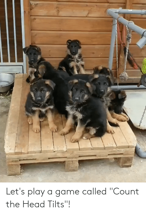 """Play A Game: Let's play a game called """"Count the Head Tilts""""!"""