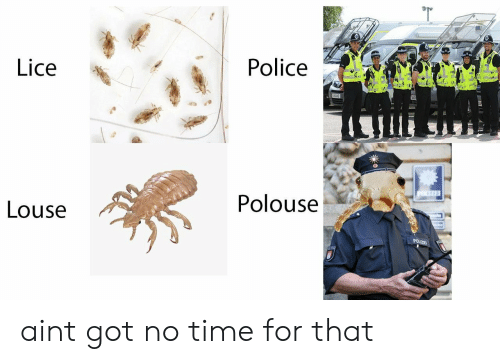 Time For That: Lice  Police  Polouse  Louse aint got no time for that
