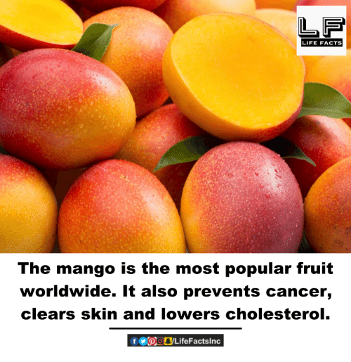 Facts, Life, and Memes: LIFE FACTS  The mango is the most popular fruit  worldwide. It also prevents cancer,  clears skin and lowers cholesterol.