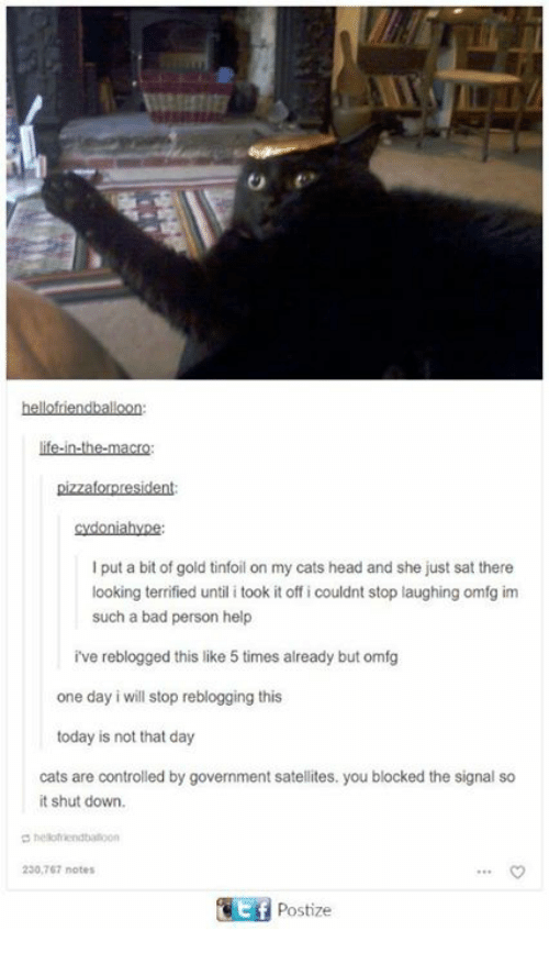 Bad, Cats, and Head: life-in-the-macro:  pizzaforpresident  cydoniahyne  I put a bit of gold tinfoil on my cats head and she just sat there  looking terrified until i took it off i couldnt stop laughing omfg im  such a bad person help  ve reblogged this like 5 times already but omfg  one day i will stop reblogging this  today is not that day  cats are controlled by government satellites. you blocked the signal so  it shut down.  hlofiendbaloon  230,767 notes  Postize