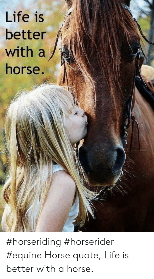 Life, Horse, and Quote: Life is  better  with a  horse. #horseriding #horserider #equine Horse quote, Life is better with a horse.