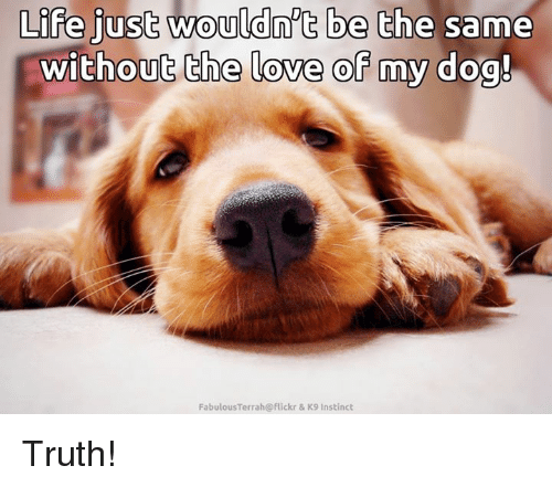 Memes, Flickr, and Terra: Life just wouldn't be the same  without the love of my dog!  Fabulous Terra h@flickr & K9 Instinct Truth!