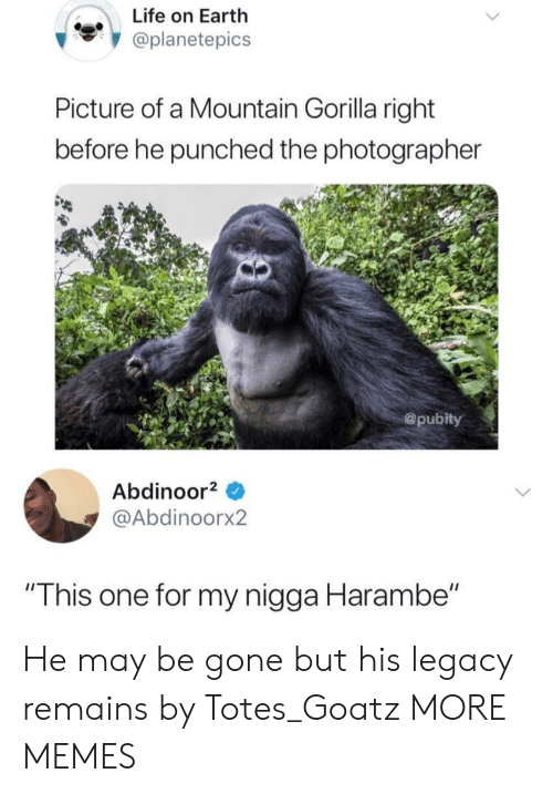 """totes: Life on Earth  oplanetepics  Picture of a Mountain Gorilla right  before he punched the photographer  @pubity  Abdinoor  @Abdinoorx2  """"This one for my nigga Harambe"""" He may be gone but his legacy remains by Totes_Goatz MORE MEMES"""