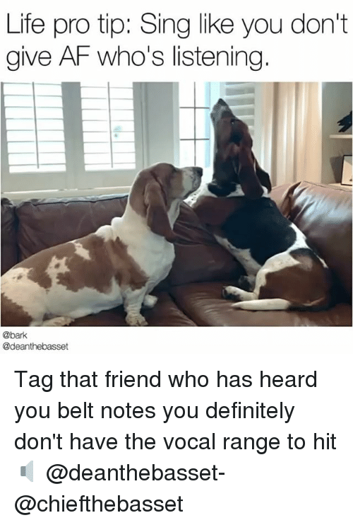 Heardly: Life pro tip: Sing like you don't  give AF who's listening  @bark  @deanthebasset Tag that friend who has heard you belt notes you definitely don't have the vocal range to hit 🔈 @deanthebasset- @chiefthebasset