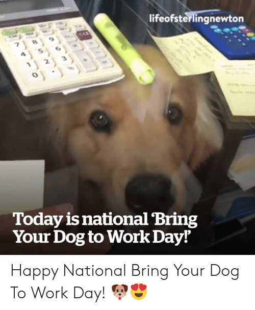 Work, Happy, and Today: lifeofsterlingnewton  Today is national Bring  Your Dog to Work Day! Happy National Bring Your Dog To Work Day! 🐶😍