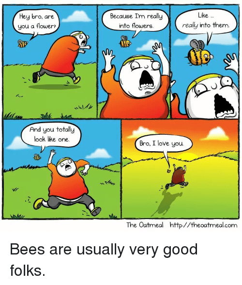 Love, I Love You, and Flower: Like  Hey bro, are  you a flower?  Because Im really  into flowers.  really into them.  And you totally  look like one.  Bro, I love you.  The Oatmeal http//theoatmeal.com  еоа Bees are usually very good folks.