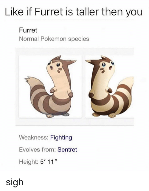 """Memes, Pokemon, and 🤖: Like if Furret is taller then you  Furret  Normal Pokemon species  Weakness: Fighting  Evolves from: Sentret  Height: 5' 11"""" sigh"""