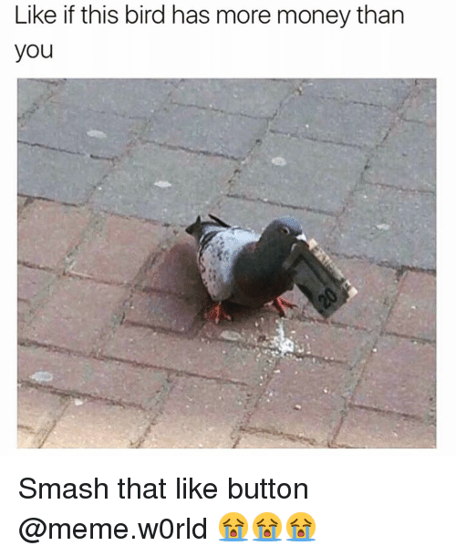 like button: Like if this bird has more money than  you Smash that like button @meme.w0rld 😭😭😭