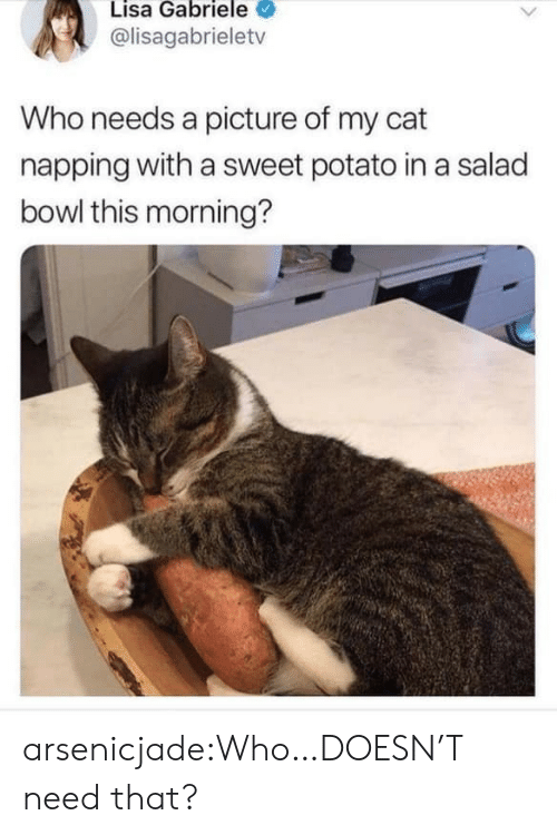 this morning: Lisa Gabriele  @lisagabrieletv  Who needs a picture of my cat  napping with a sweet potato in a salad  bowl this morning? arsenicjade:Who…DOESN'T need that?