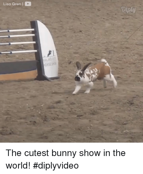 Bunni: Lisa Gren  Diply The cutest bunny show in the world! #diplyvideo