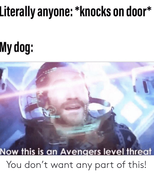 Avengers, Dog, and Don: Literally anyone: *knocks on door*  My dog:  Now this is an Avengers level threat You don't want any part of this!