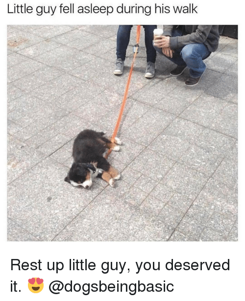 you deserved it: Little guy fell asleep during his walk Rest up little guy, you deserved it. 😍 @dogsbeingbasic