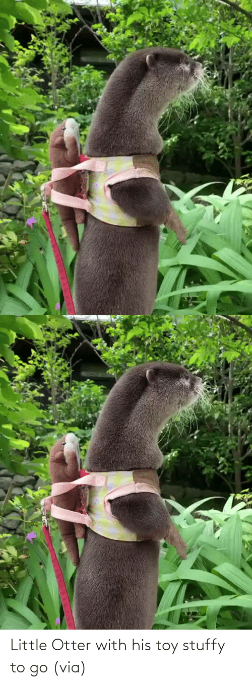 To Go: Little Otter with his toy stuffy to go (via)