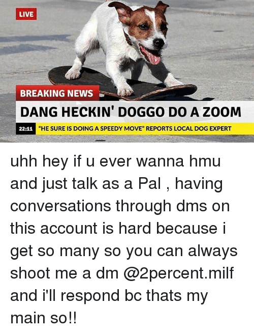 """A Dm: LIVE  BREAKING NEWS  DANGHECKIN' DOGGO DO A ZOOM  """"HE SURE IS DOING A SPEEDY MOVE"""" REPORTS LOCAL DOG EXPERT  22:11 uhh hey if u ever wanna hmu and just talk as a Pal , having conversations through dms on this account is hard because i get so many so you can always shoot me a dm @2percent.milf and i'll respond bc thats my main so!!"""