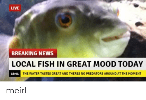 Mood, News, and Breaking News: LIVE  BREAKING NEWS  LOCAL FISH IN GREAT MOOD TODAY  19:41  THE WATER TASTES GREAT AND THERES NO PREDATORS AROUND AT THE MOMENT meirl