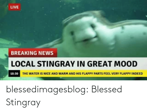Parts: LIVE  BREAKING NEWS  LOCAL STINGRAY IN GREAT MOOD  18:30 THE WATER IS NICE AND WARM AND HIS FLAPPY PARTS FEEL VERY FLAPPY INDEED blessedimagesblog:  Blessed Stingray