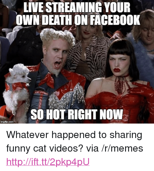 """funny cat: LIVE STREAMING YOUR  OWN DEATHON FACEBO0K  SO HOT RIGHT NOW <p>Whatever happened to sharing funny cat videos? via /r/memes <a href=""""http://ift.tt/2pkp4pU"""">http://ift.tt/2pkp4pU</a></p>"""