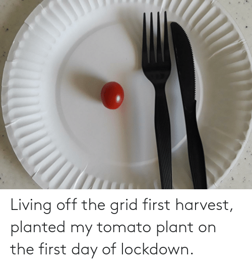 First Day: Living off the grid first harvest, planted my tomato plant on the first day of lockdown.