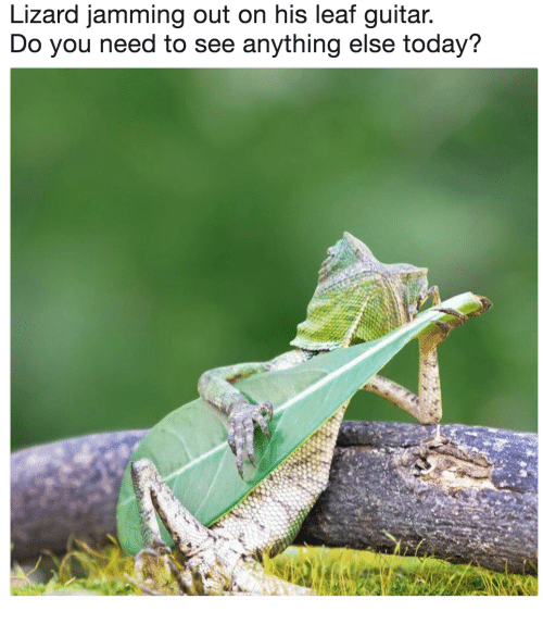 jamming: Lizard jamming out on his leaf guitar  Do you need to see anything else today?